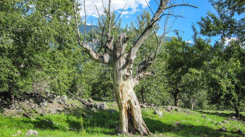 Étrange arbre sec avec des branches espacées dans différentes directions photographie stock
