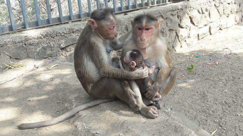 Étreinte de singe images libres de droits