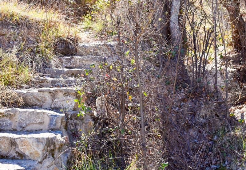 étroit d'un escalier fait avec des étapes de béton et de pierres dans un jardin avec beaucoup de différentes usines s'élevant aut image stock