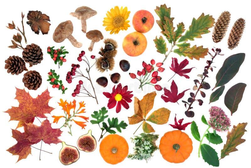 Étude de la nature à l'automne avec la flore et la faune alimentaires photos stock