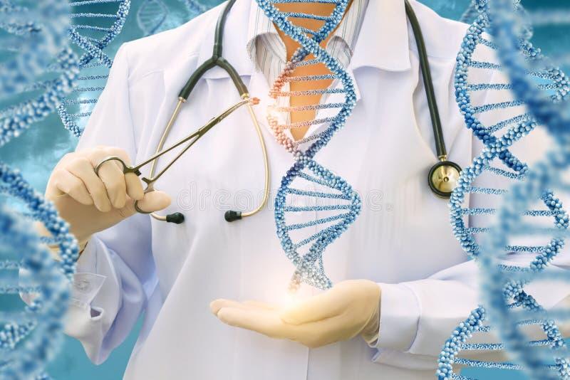 Étude des molécules d'ADN par un docteur photographie stock