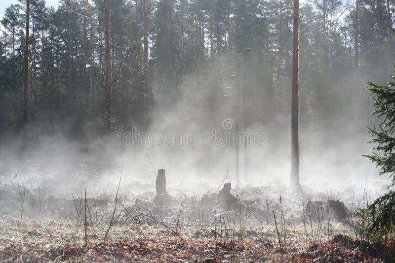Évaporation en nature photos libres de droits