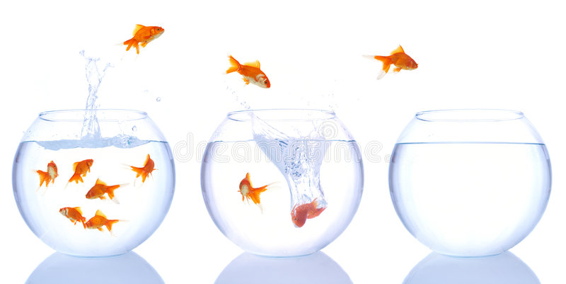 Évasion de Goldfish image stock