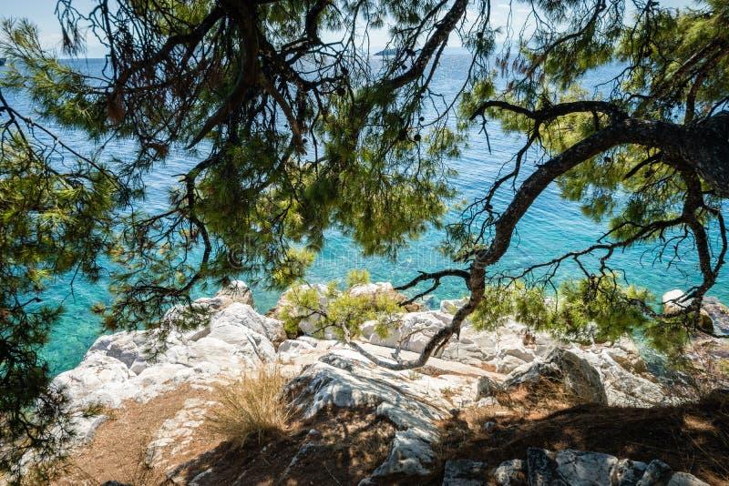 Évasion secrète de paysage d'île de Skiatos sous les pins photographie stock