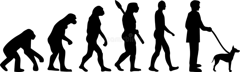 Évolution de Manchester Terrier illustration de vecteur