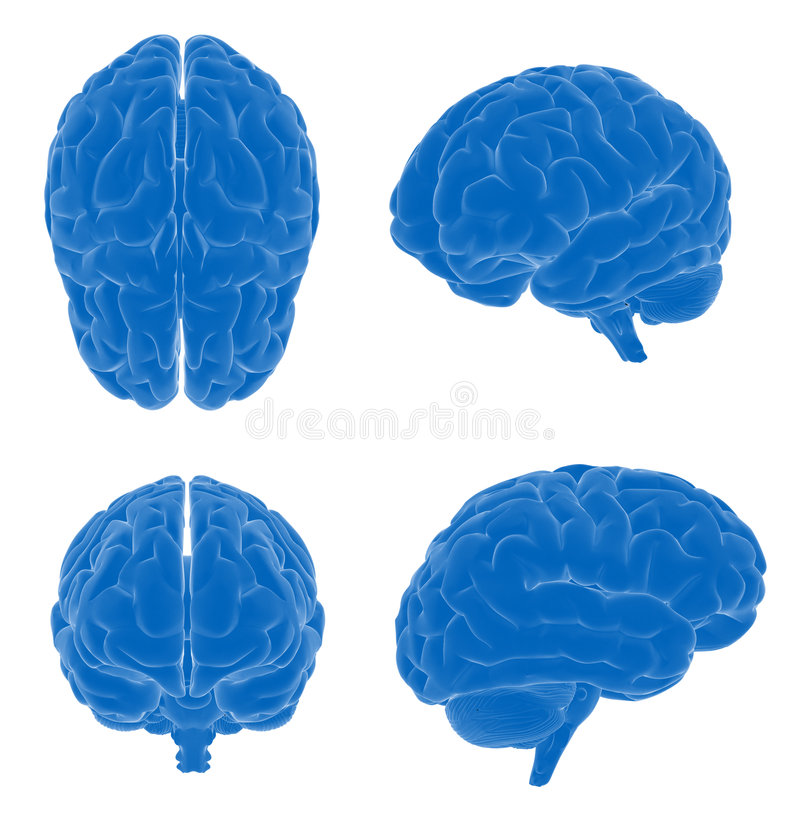 être humain de cerveau illustration de vecteur