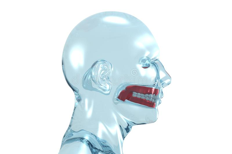 être humain principal de dentier illustration de vecteur