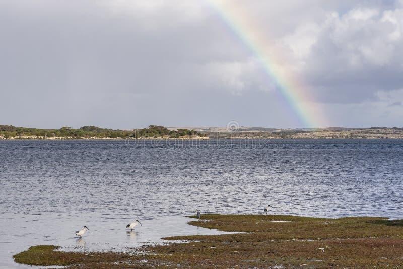 Íbis brancos australianos no mar da ilha do canguru com um arco-íris no fundo, Austrália Ocidental foto de stock