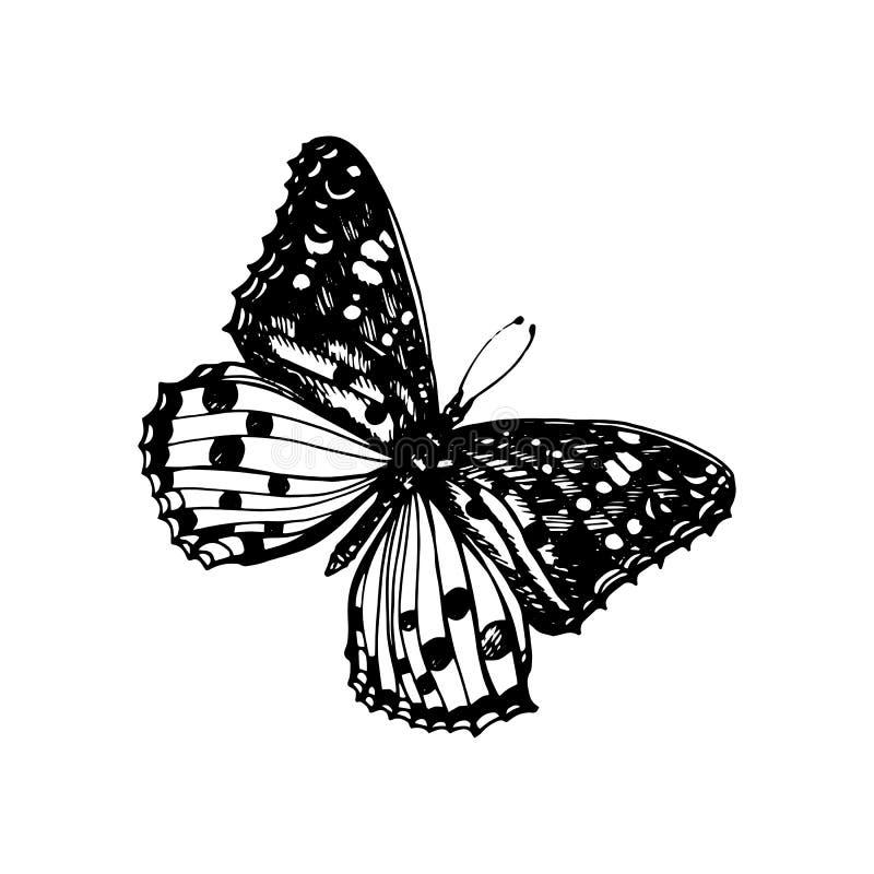Ícone da borboleta ilustração royalty free