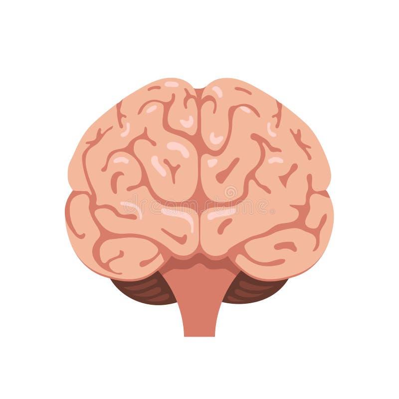 Ícone da opinião dianteira do cérebro ilustração royalty free