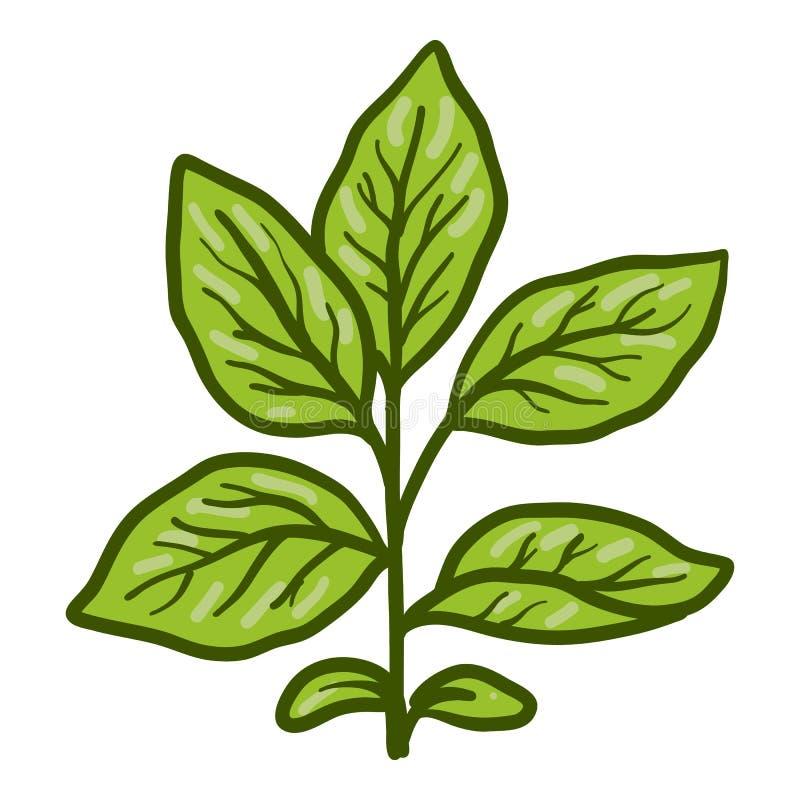 Ícone da planta de feijão de soja, estilo tirado mão ilustração do vetor