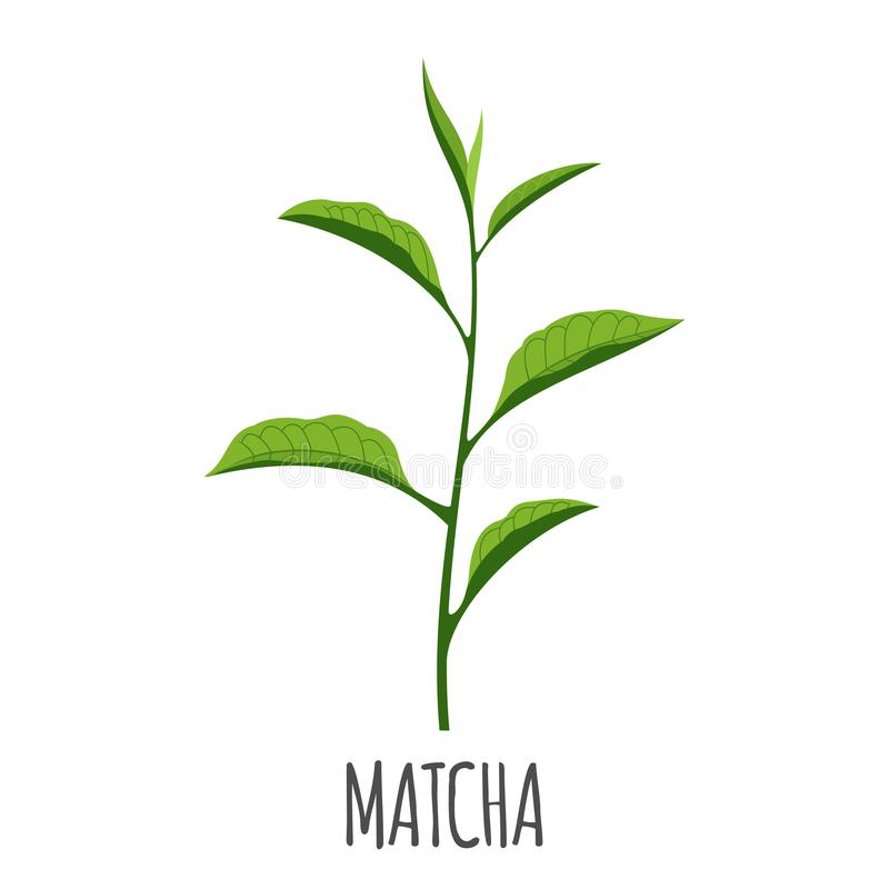 Ícone de Matcha no estilo liso isolado no branco ilustração stock