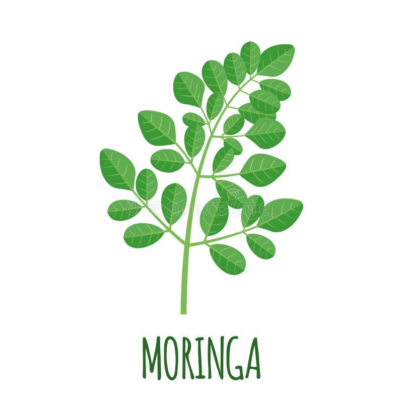 Ícone de Moringa no estilo liso isolado no branco ilustração royalty free