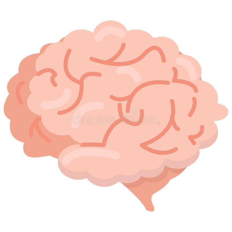 Ícone do órgão do cérebro humano, ilustração do vetor ilustração stock