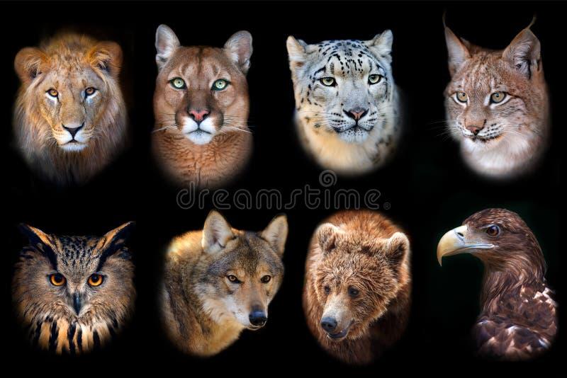 Ícone do animal selvagem imagem de stock royalty free