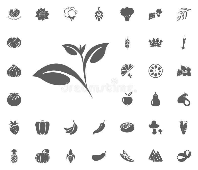 Ícone do chá verde Grupo do ícone da ilustração do vetor das frutas e legumes símbolos do alimento e da planta ilustração royalty free