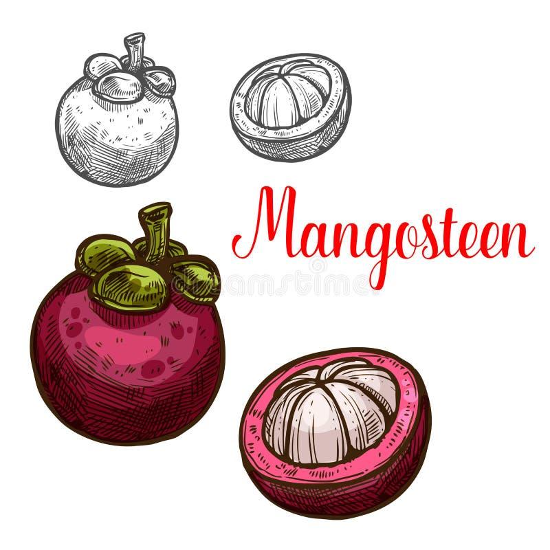 Ícone do corte do fruto do esboço do vetor do mangustão ilustração stock