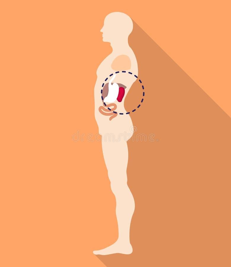 Ícone do lugar do corpo do baço, estilo liso ilustração royalty free