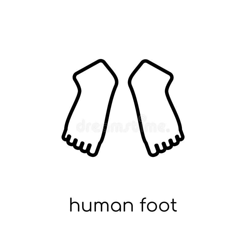 Ícone do pé humano Ico linear liso moderno na moda do pé humano do vetor ilustração stock