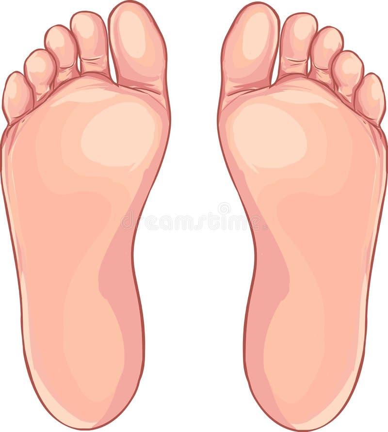 Ícone do pé humano no estilo dos desenhos animados em um fundo branco ilustração do vetor