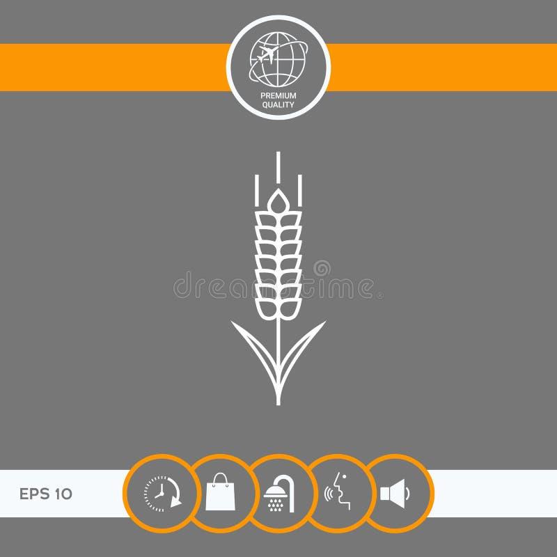 Ícone do spikelet do trigo ou do centeio ilustração do vetor