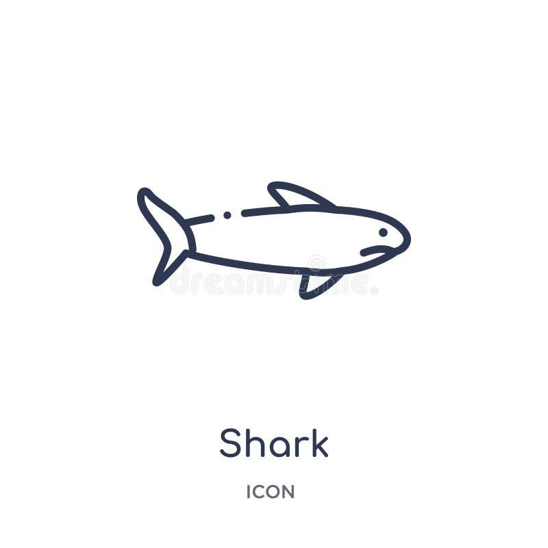 Ícone do tubarão da coleção náutica do esboço Linha fina ícone do tubarão isolado no fundo branco ilustração do vetor