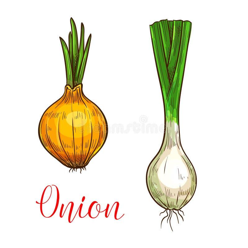 Ícone do vegetal do esboço do vetor do alho-porro da cebola ilustração royalty free