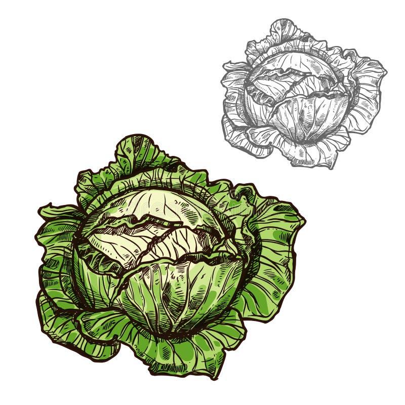 Ícone do vegetal do esboço do vetor da couve ilustração stock