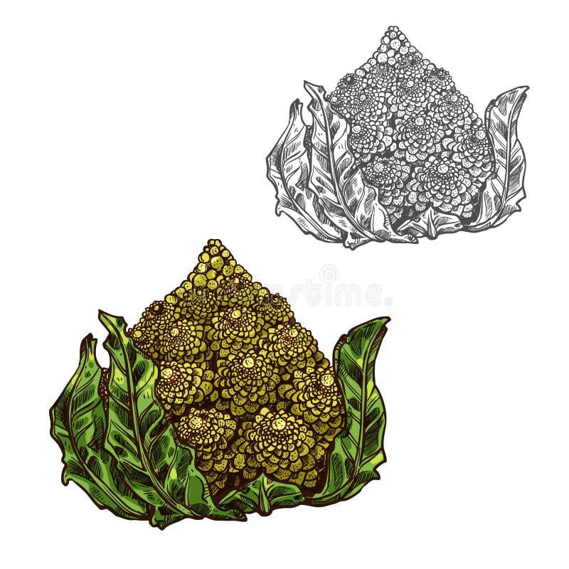 Ícone do vegetal do esboço do vetor da couve de Romanesco ilustração stock