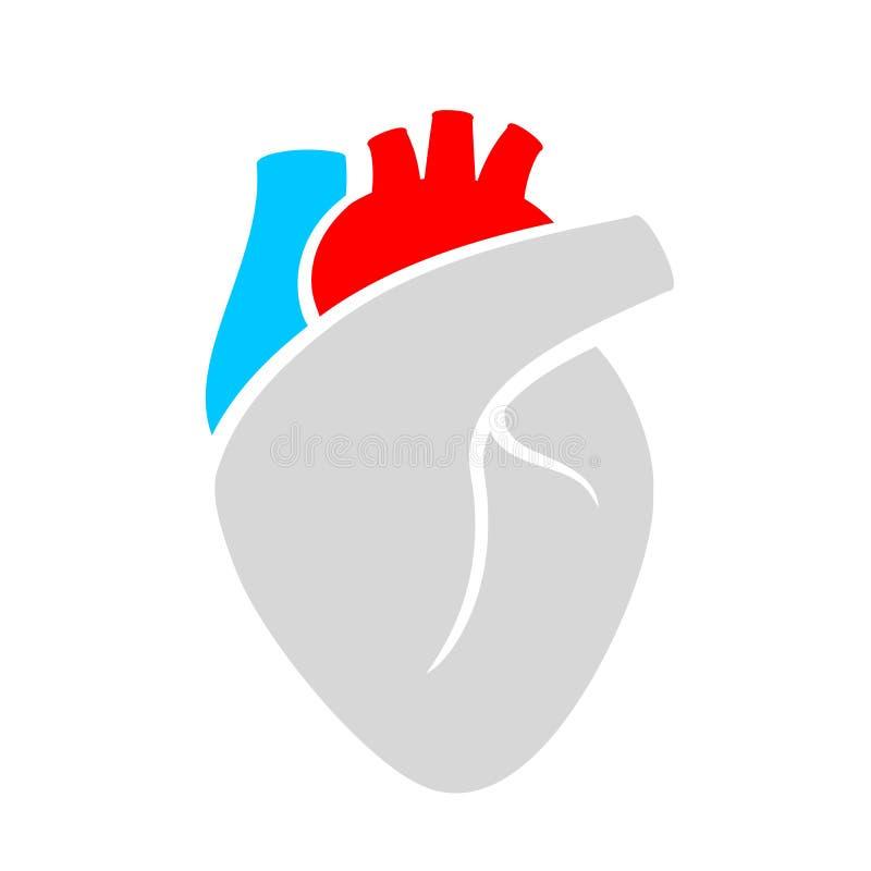 Ícone do vetor do órgão do coração ilustração do vetor