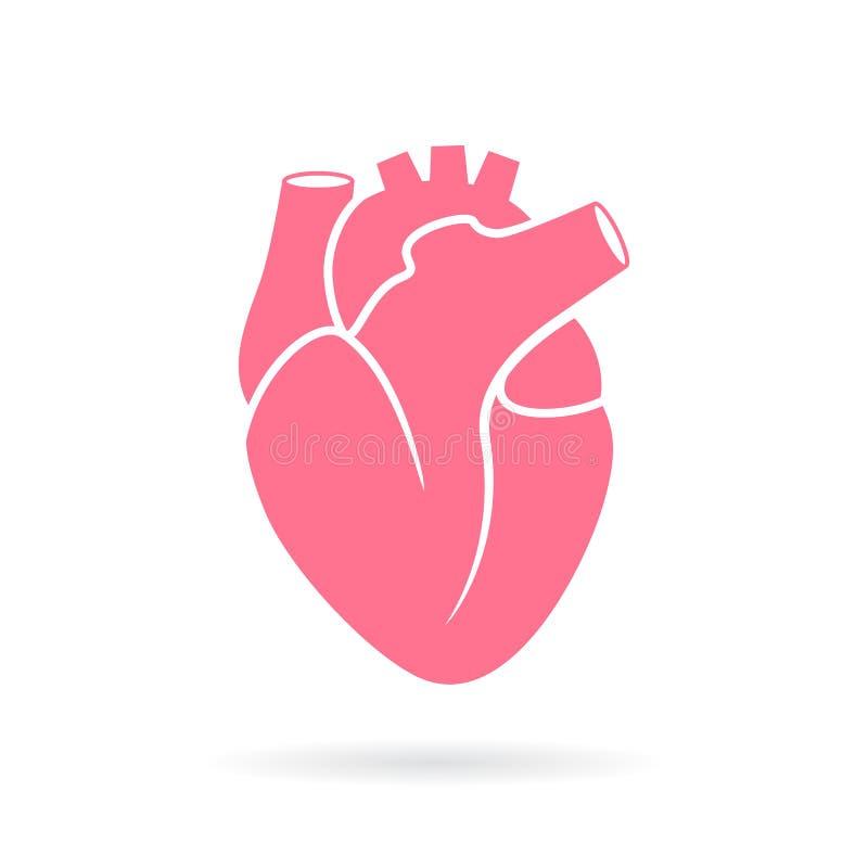 Ícone do vetor da anatomia do coração ilustração royalty free