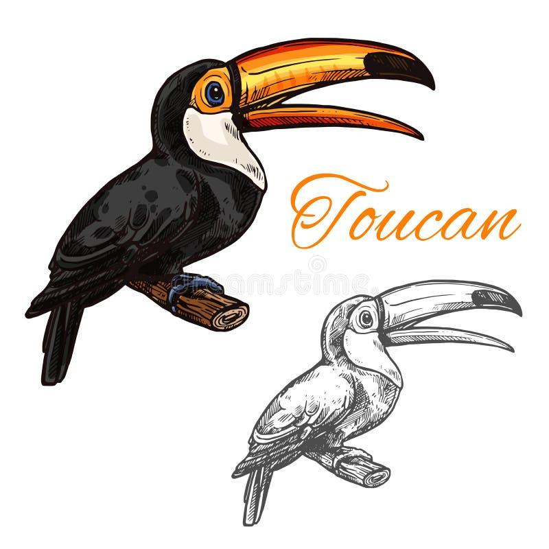 Ícone exótico selvagem do pássaro do esboço do vetor do tucano ilustração royalty free