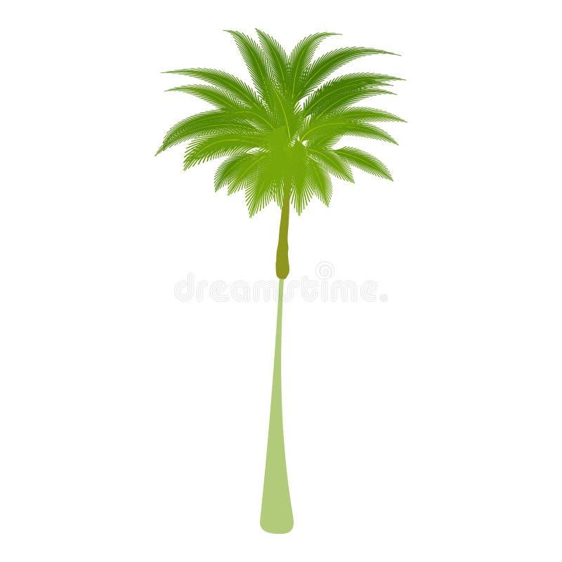 Ícone fino da palmeira, estilo dos desenhos animados ilustração do vetor