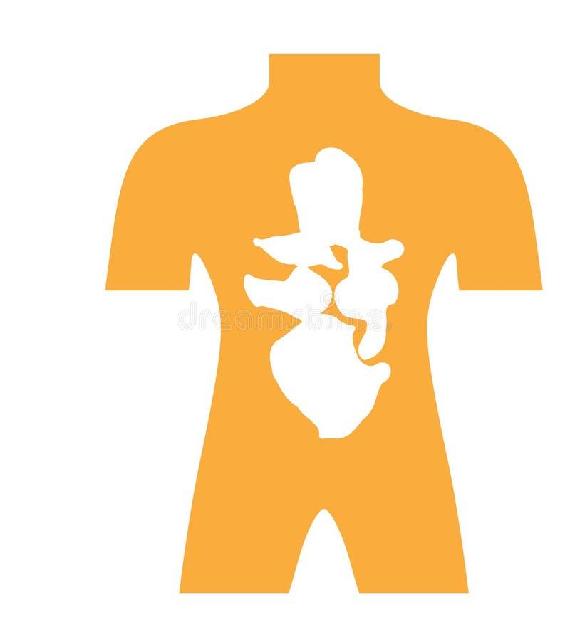 Ícone humano da anatomia do vetor ilustração stock