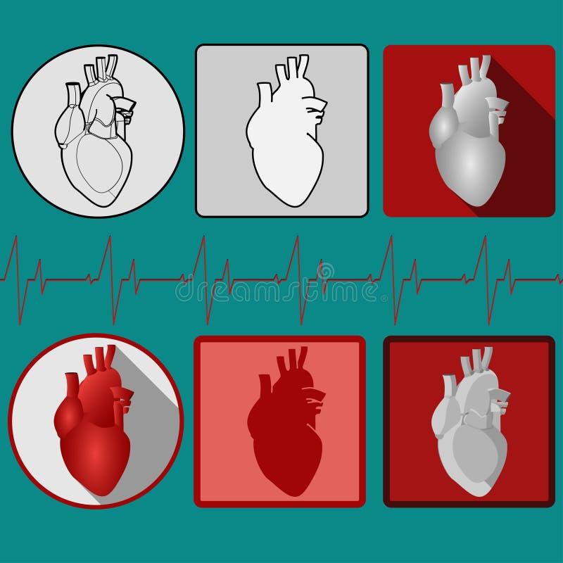 Ícone humano do coração com cardiograma - vetor ilustração do vetor
