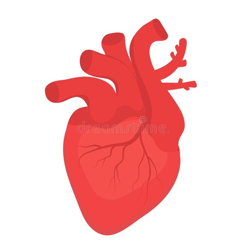 Ícone humano do coração, estilo liso Símbolo dos órgãos internos Anotomy, cardiologia, conceito Isolado no fundo branco Vetor ilustração stock