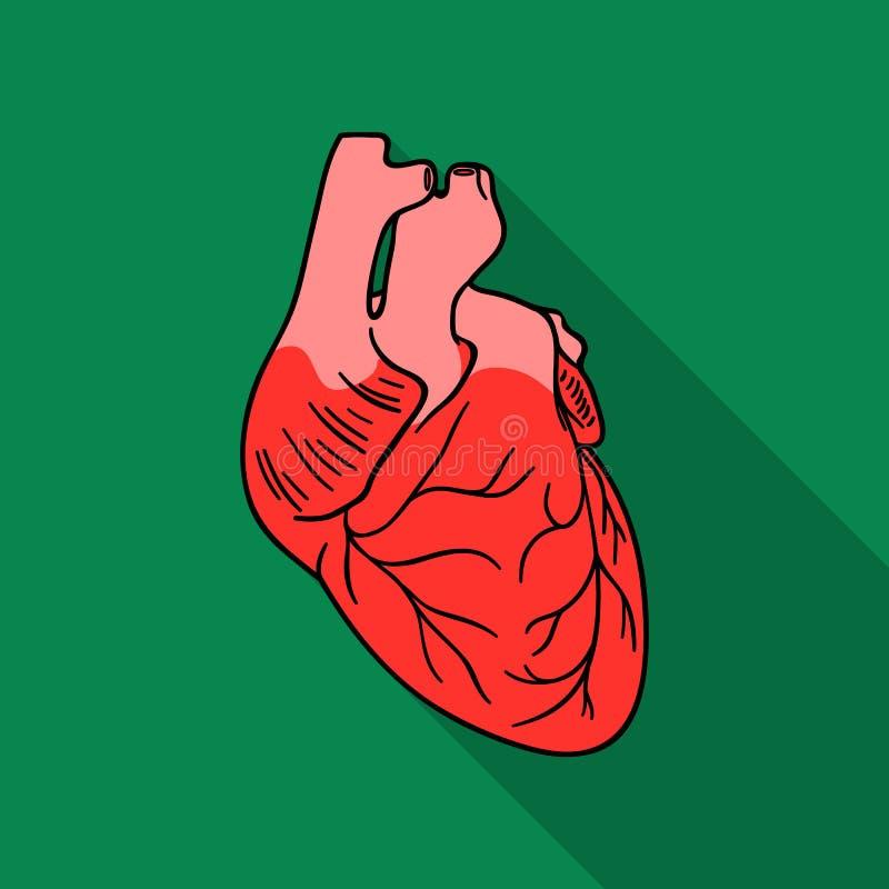 Ícone humano do coração no estilo liso isolado no fundo branco Ilustração do vetor do estoque do símbolo dos órgãos humanos ilustração stock