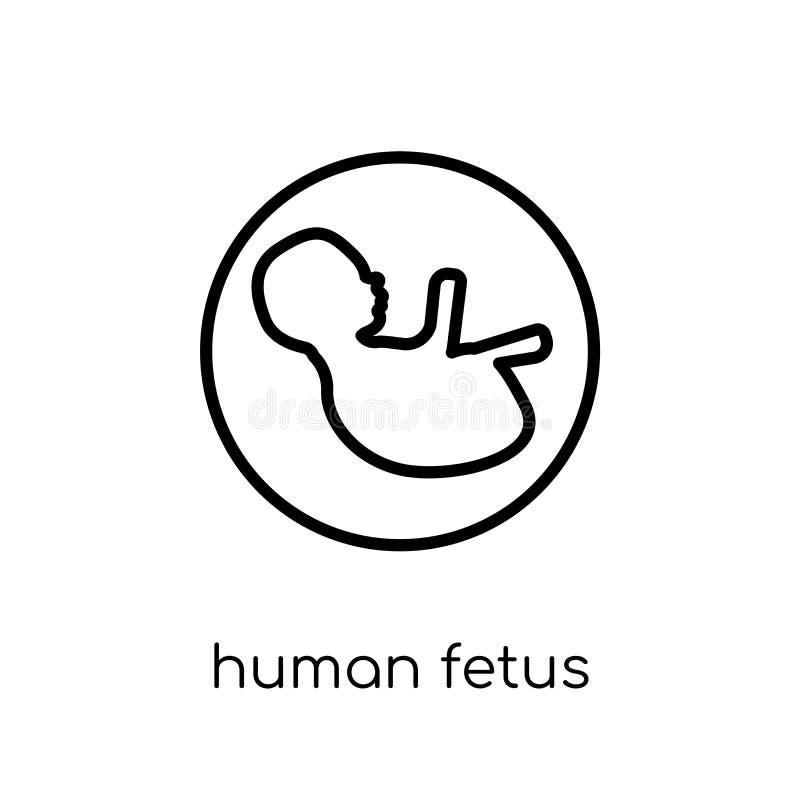 Ícone humano do feto Feto humano do vetor linear liso moderno na moda mim ilustração royalty free