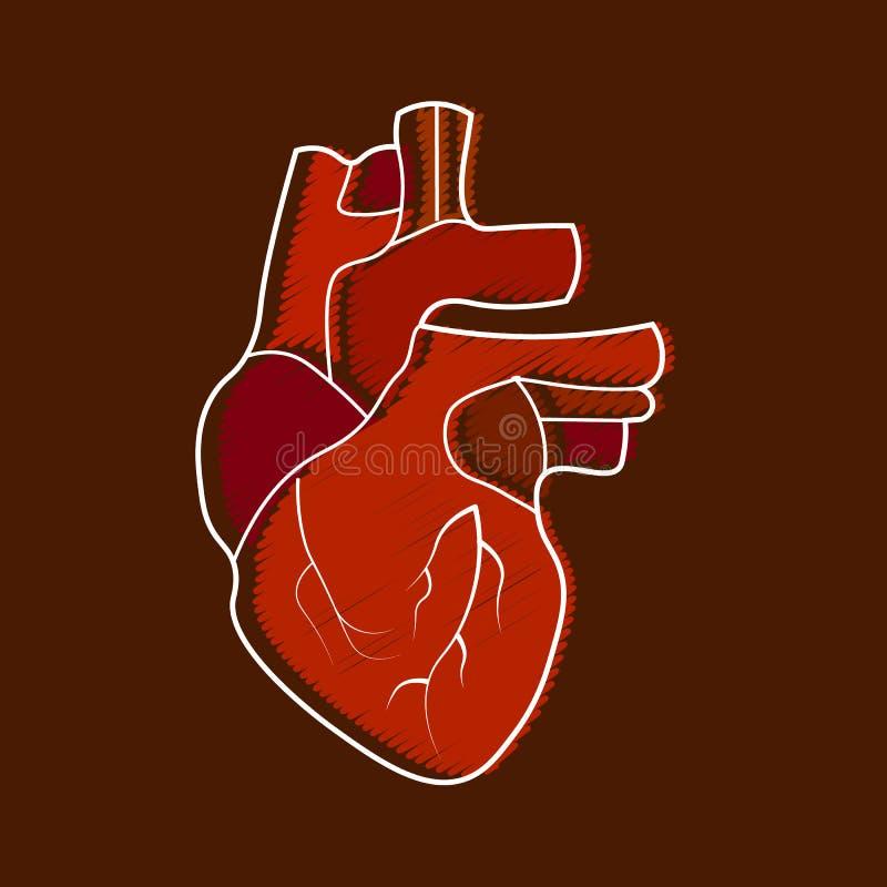 Ícone humano estilizado da anatomia do coração Estilo liso moderno dos desenhos animados, brilhante e bonito ilustração do vetor