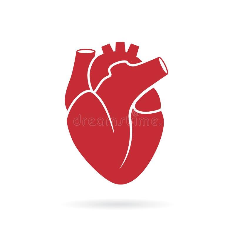Ícone humano realístico do vetor do coração ilustração royalty free