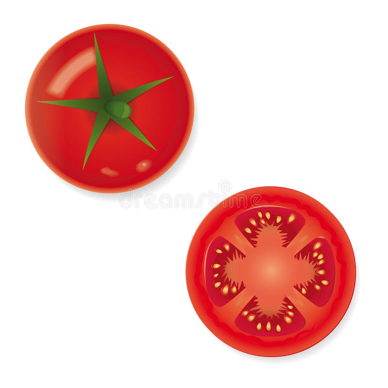 Ícone inteiro e partido ao meio do vetor do fruto do tomate ilustração stock