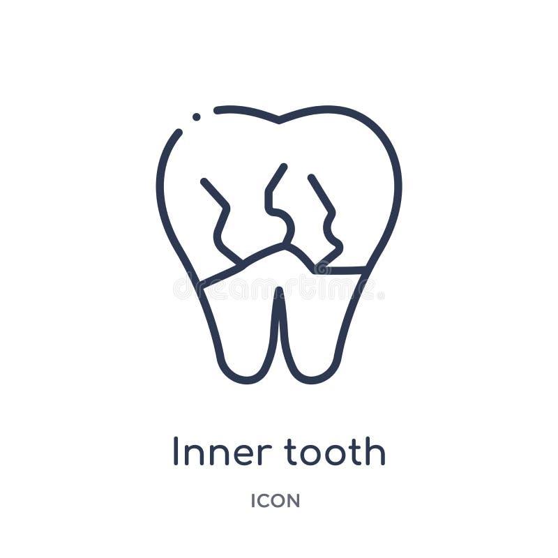 Ícone interno linear do dente da coleção do esboço do dentista Linha fina ícone interno do dente isolado no fundo branco dente in ilustração stock