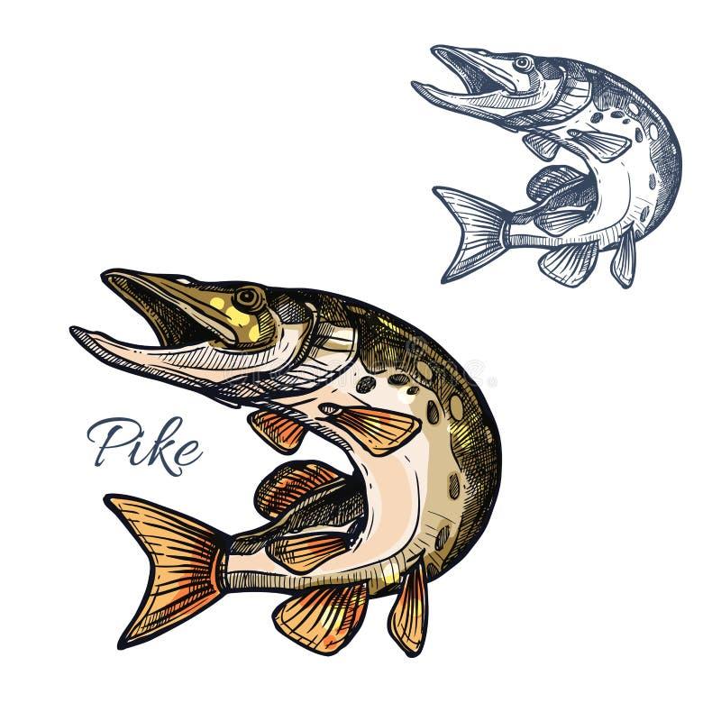 Ícone isolado vetor do esboço dos peixes de Pike ilustração stock