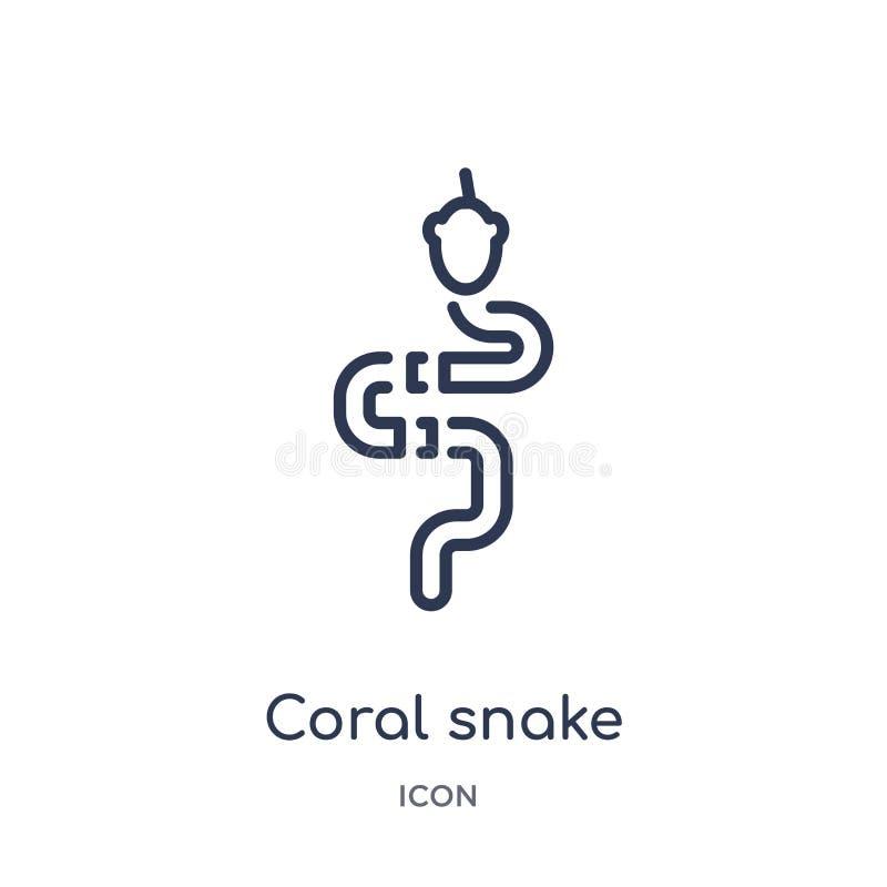 Ícone linear da serpente coral da coleção do esboço dos animais Linha fina ícone da serpente coral isolado no fundo branco Coral  ilustração stock
