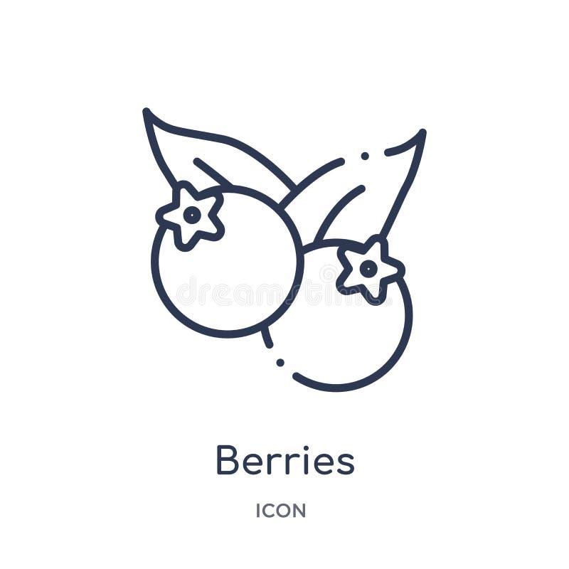 Ícone linear das bagas da coleção do esboço dos frutos Linha fina ícone das bagas isolado no fundo branco bagas na moda ilustração stock
