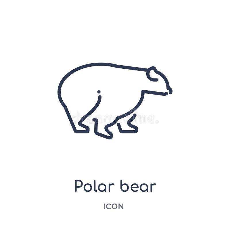 Ícone linear do urso polar da coleção do esboço dos animais Linha fina ícone do urso polar isolado no fundo branco urso polar na  ilustração royalty free