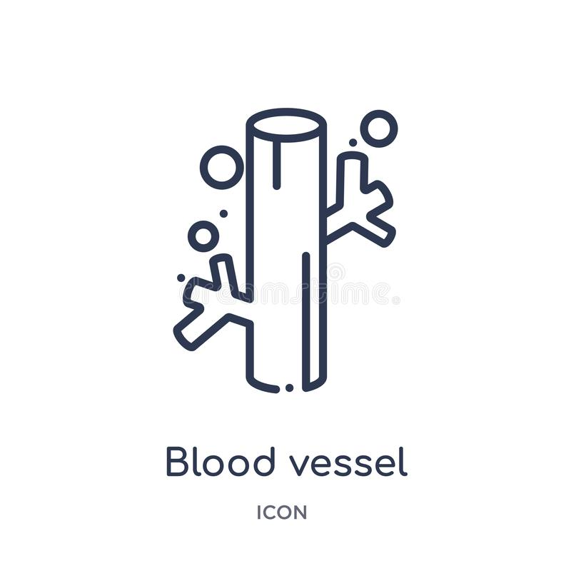 Ícone linear do vaso sanguíneo da coleção humana do esboço das partes do corpo Linha fina ícone do vaso sanguíneo isolado no fund ilustração stock