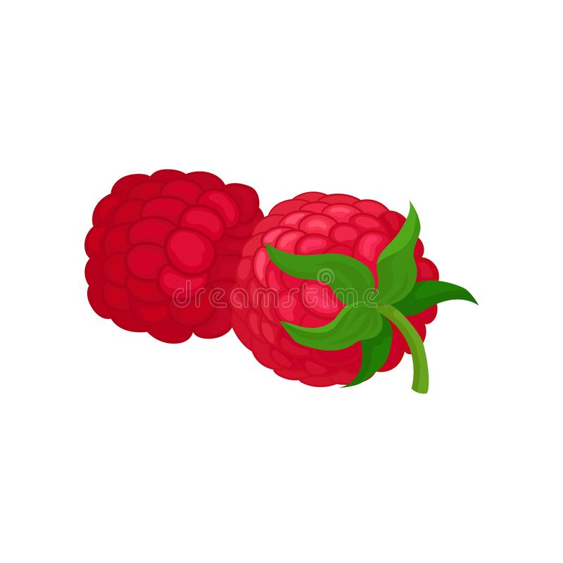 Ícone liso detalhado do vetor de duas framboesas frescas Fruto suculento do verão Alimento natural Baga saboroso Produto orgânico ilustração royalty free