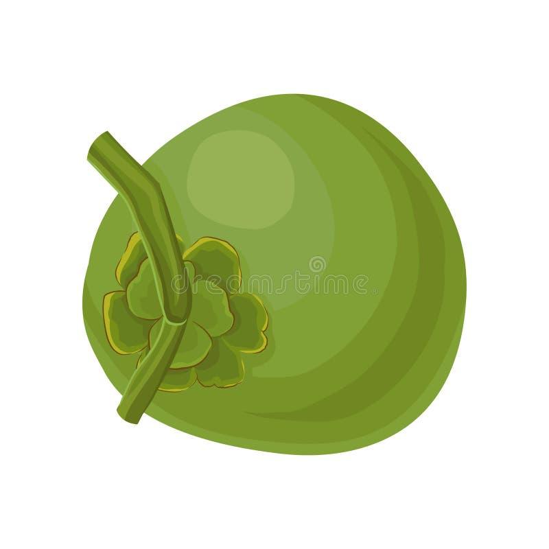 Ícone liso do vetor do coco verde novo inteiro Produto fresco e natural Fruto tropical saudável Elemento para o cartaz ou ilustração royalty free