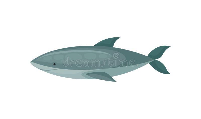 Ícone liso do vetor do tubarão azul peixes marinhos Longo-corpóreos Tema da vida do mar e do oceano ilustração do vetor